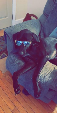 Tidelines Staffer, freshman Alex Maley spent some time with his dog, Toby, by taking pictures of him with a pair of cool glasses.